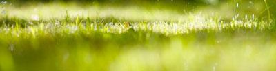 grassoorten